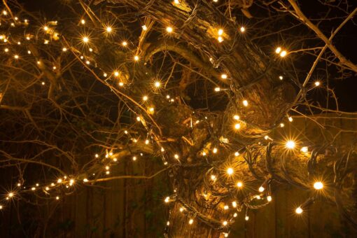 boom met verlichting