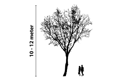 boomverlichting 10 tot 12 meter