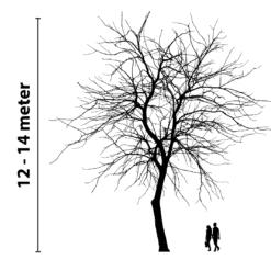 boomverlichting 12 tot 14 meter