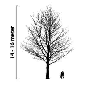 boomverlichting 14 tot 16 meter