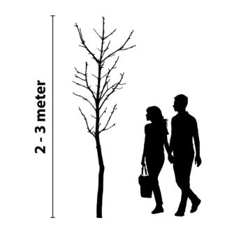 boomverlichting 2 tot 3 meter