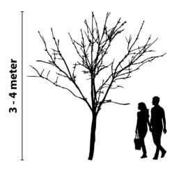 boomverlichting 3 tot 4 meter