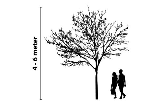boomverlichting 4 tot 6 meter