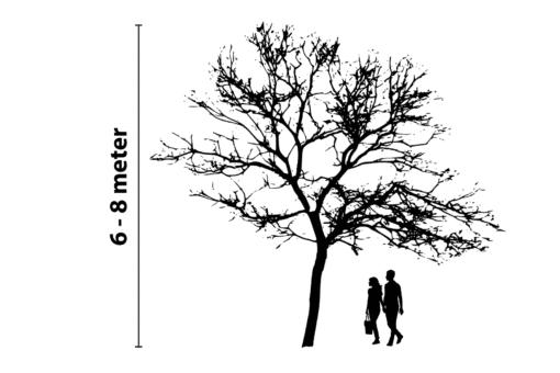 boomverlichting 6 tot 8 meter