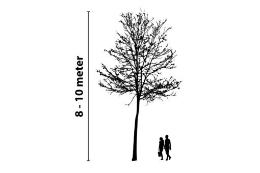 boomverlichting 8 tot 10 meter