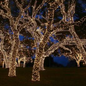 boomverlichting loofboom