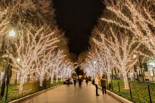 boomverlichting magisch