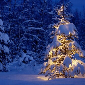 hoeveel kerstlampjes in kerstboom
