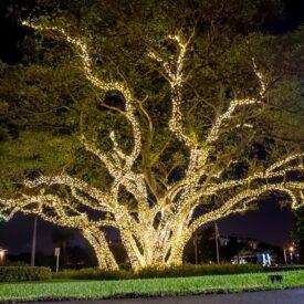 kerstverlichting buiten grote boom