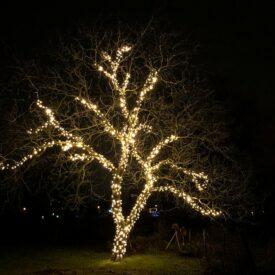 kerstverlichting grote boom buiten