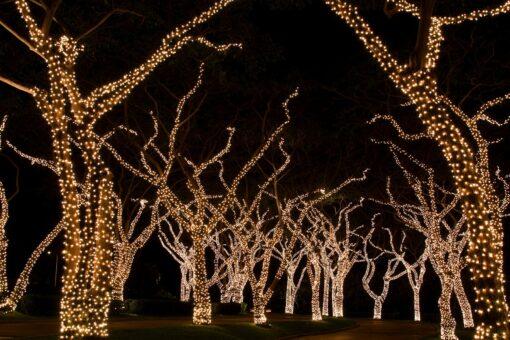 lichtsnoer boom