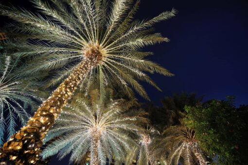 palmboom kerstverlichting