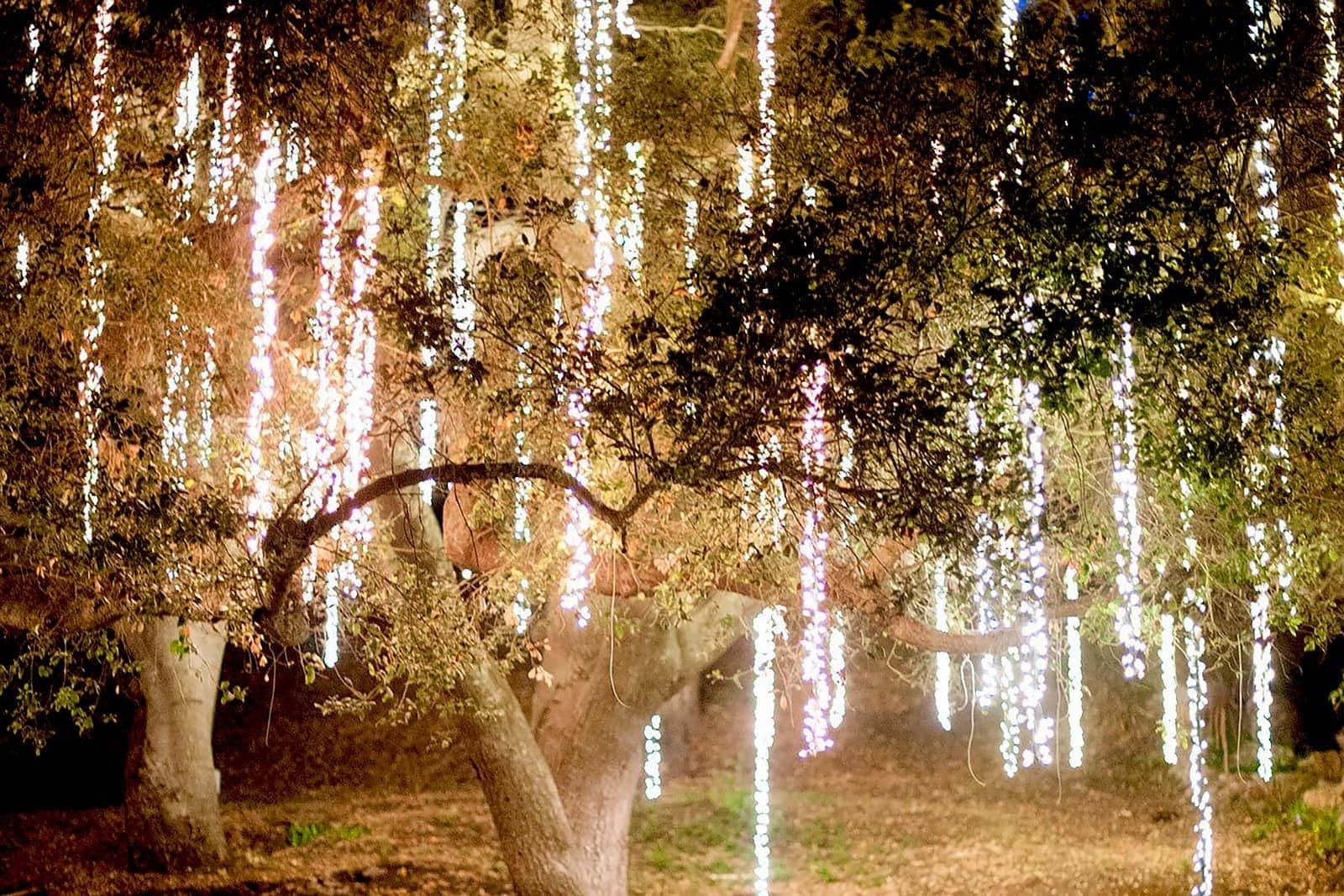 Koppelbare Clusterverlichting Warm Wit 120 Led Lampjes