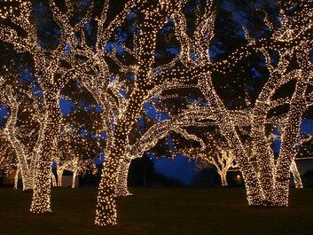 verlichting voor in een boom